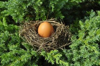 egg-1600890_1920