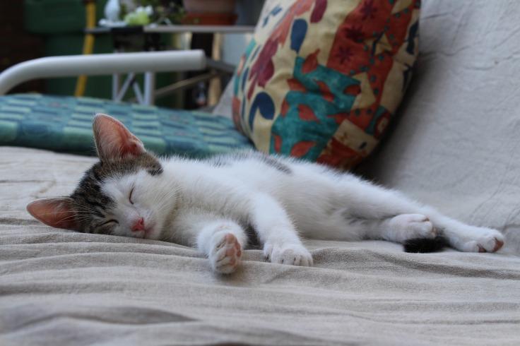 cat-1761145_1920