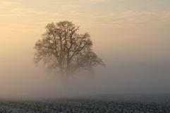 winter-1902502_1920